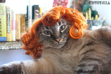 My Cat Totally looks Carrot Top