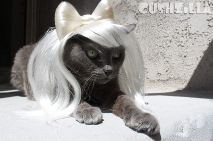 My Cat Totally looks like Lady Gaga. Please don't po-po-poke her face.
