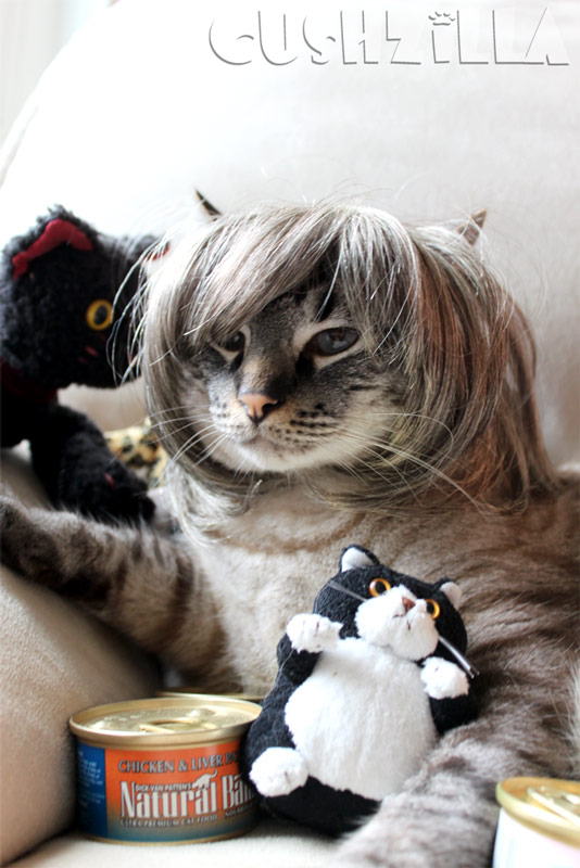 Cats And Dogs That Totally Look Like Someone Famous From