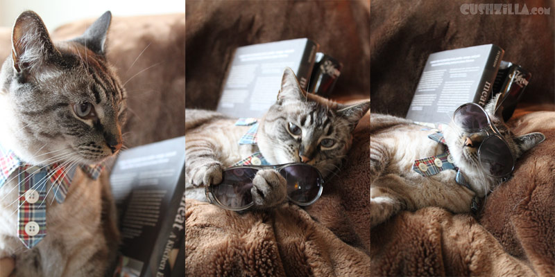 How to get dressed if you are a cat. A photo montage.