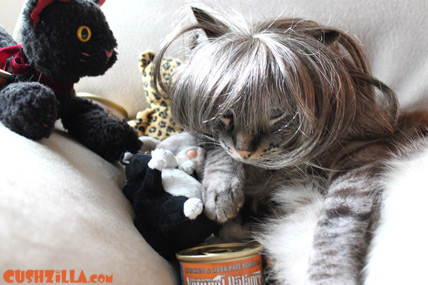 Cat wigs; Wigs for kitty are the new thing