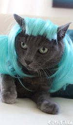 Cat Wig / Dog Wig: Cushzilla Aqua Anime Pet Wig