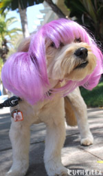 Dog Wig / Cat Wig: Cushzilla Anime Purple Pet Wig