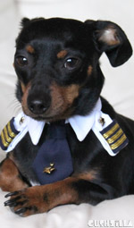 Pilot Shirt for Cats And Dogs - X-SMALL Captain Kitty / Dog from Cushzilla