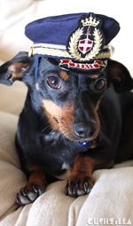 Pilot Hat for Cats And Dogs in X-SMALL from Cushzilla