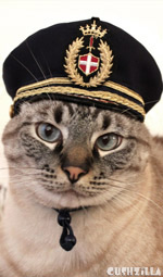 Pilot Hat for Cats: Small, from Cushzilla