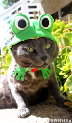 Frog Costume for Cats And Dogs from Cushzilla