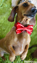 Cat Bow Tie / Dog Bow Tie in Sparkly Pee Wee Red from Cushzilla