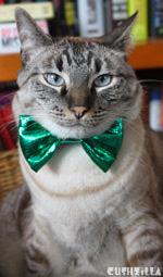 Cat Bow Tie / Dog Bow Tie in Catnip Evergreen from Cushzilla