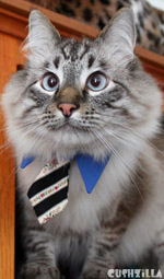 Cat Necktie / Dog Necktie in Business Cat Blue from Cushzilla