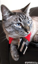 Cat Necktie / Dog Necktie in Business Cat Red from Cushzilla