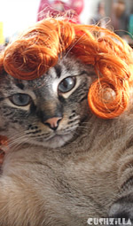 Cat Wig / Dog Wig: Cushzilla Curly Red Wig for Cats And Dogs