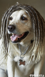Dog Wig / Cat Wig: Cushzilla Rasta Dreadlock Wig for Dogs And Cats