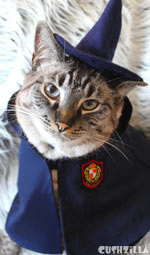 Yer a Hairy Wizard! Costume for Cats And Dogs from Cushzilla