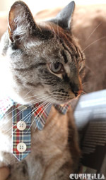 Plaid Hipster Kitty Shirt for Cats And Dogs from Cushzilla