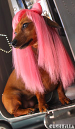 Cat Wig / Dog Wig: Cushzilla Lady Gaga Wig in Paparazzi Pink