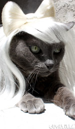 Cat Wig / Dog Wig: Cushzilla Lady Gaga Wig in Poker Face Platinum