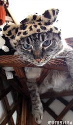 The Great Catsby Leopard Bonnet for Cats And Dogs from Cushzilla
