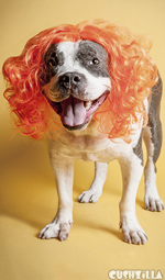 Dog Wig / Cat Wig: Cushzilla Orange Wig for Dogs And Cats