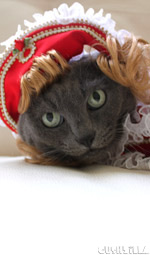 Prince Charming Hat for Cats And Dogs from Cushzilla