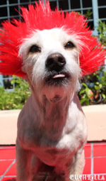 Dog Wig / Cat Wig: Cushzilla Sid Not-So-Vicious Red Punk Wig