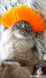 Dog Wig / Cat Wig: Cushzilla Beaker-Gone-Punker Orange Punk Wig