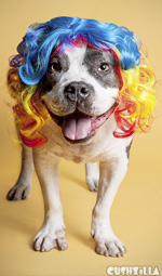 Dog Wig / Cat Wig: Cushzilla Curly Rainbow Wig for Dogs And Cats