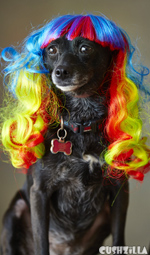 Dog Wig / Cat Wig: Cushzilla Wavy Rainbow Wig for Dogs And Cats