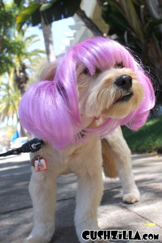 Wigs For Cats And Dogs