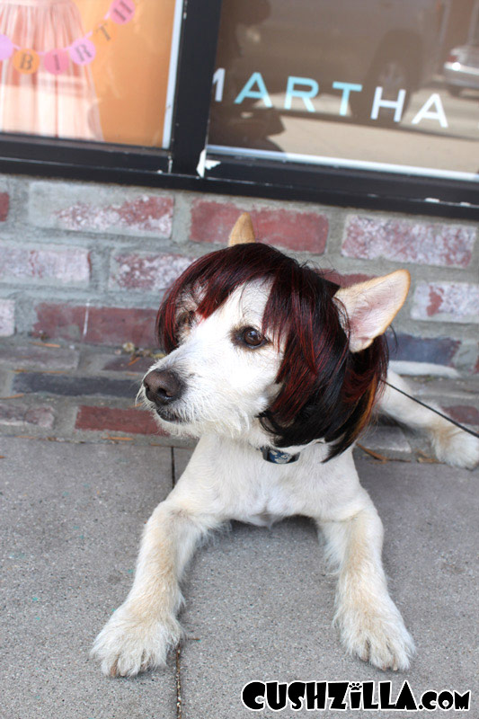 Cat Wig Dog Wig Cushzilla Shaaaron Brunette Bowl Cut Wig