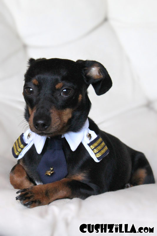 X Small Pilot Shirt For Cats And Dogs