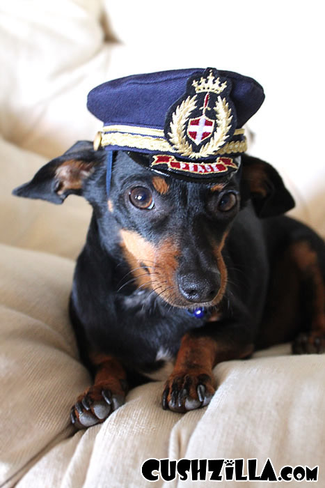 Captain Kitty Pilot Hat For Cats And Dogs X Small From