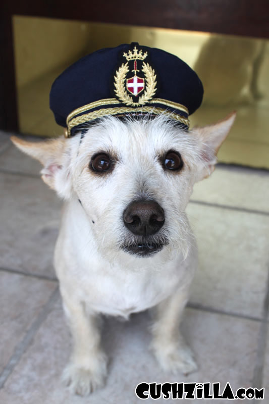 SMALL Pilot Hat for Dog & Pilot Hat for Dogs - Captain Dog Hat in SMALL from Cushzilla