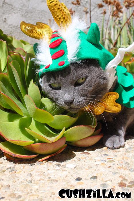 anne hathaway cat woman