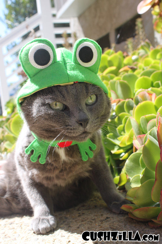 Dog Costume / Cat Costume - FROG & Frog Costume for Cats and Dogs from Cushzilla