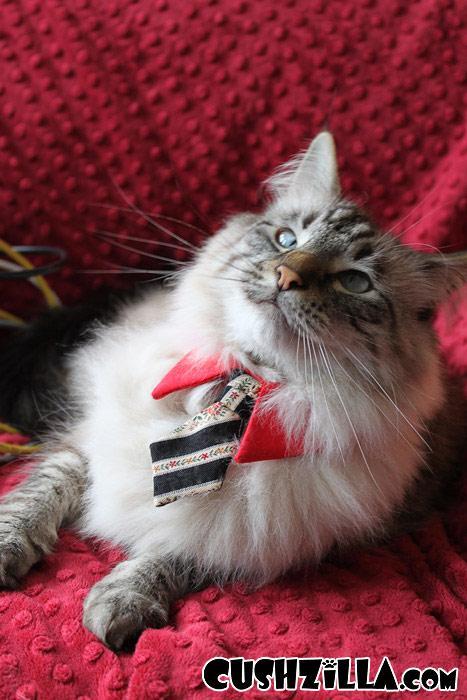 Cat Necktie Dog Necktie In Business Cat Red From Cushzilla