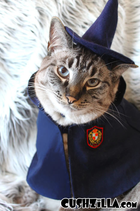 Wizard Kitty Hats inspired by Harry Potter Houses