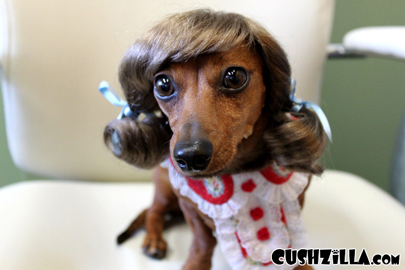 cushzilla-pigtail-dog-wig-cat-wig-130-01