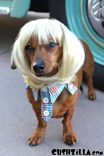 Dog Wig Cat Wig Cushzilla Blonde Bowl Cut Wig