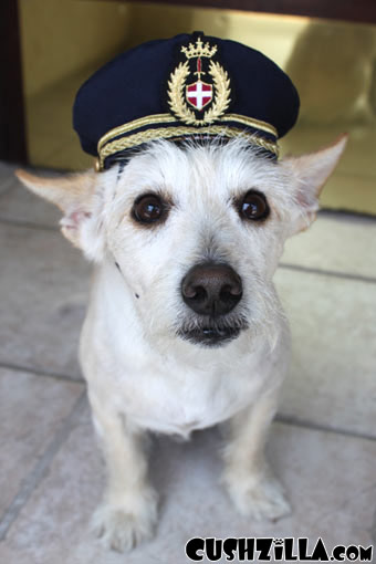 SMALL Pilot Hat for Dog