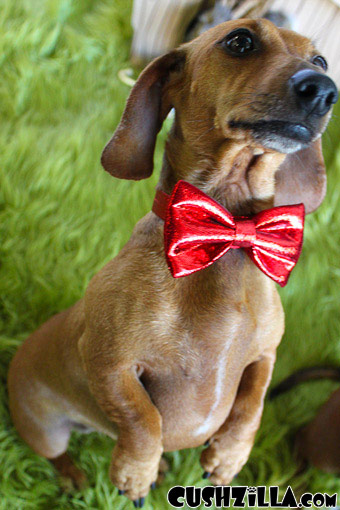 Bow Tie for Cats / Bow Tie for Dogs - Sparkly RED
