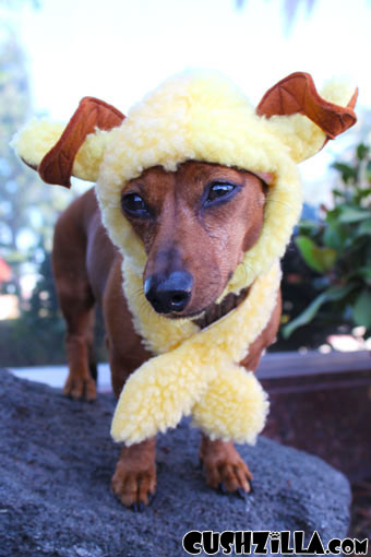 A Woof in Sheeps Clothing Costume for Dogs & Cats from Cushzilla