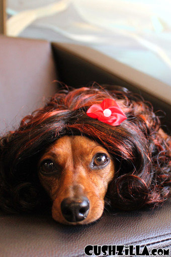 Cat Wig Dog Wig Cushzilla Curly Brunette Wig For Cats