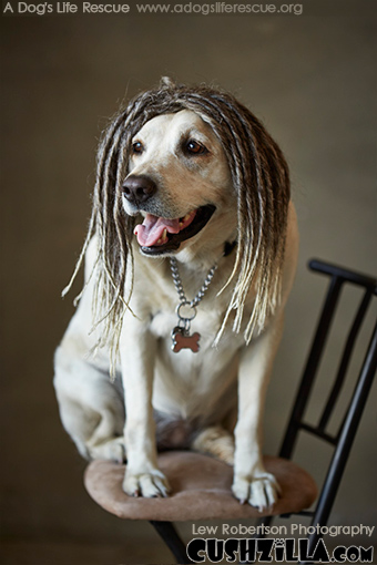 Dreadlock Dog Wig / Dreadlock Cat Wig