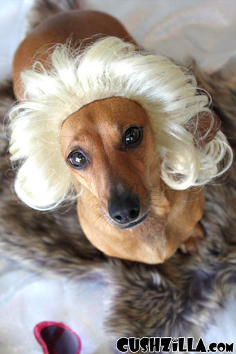 Cushzilla Gentlemen Prefer Blonde Wig for Cats & Dogs