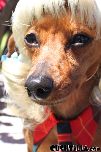 Blonde Pigtails Wig for Cats / Wig for Dogs