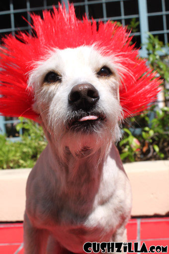 Red Spiky Punk Wig for Cats / Punk Wig for Dogs