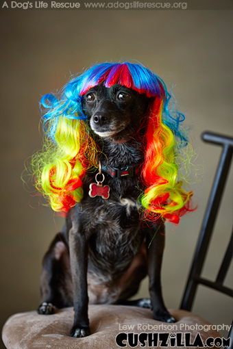 Dog Wig / Cat Wig: Cushzilla Wavy Rainbow Wig for Dogs & Cats