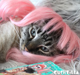 Pink Wig for Cats / Wig for Dogs