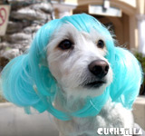 Aqua Blue Pet Wigs for Cats / Wigs for Dogs